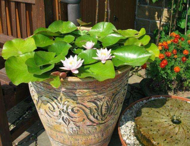 оплаты: наличными, как сделать прудик для лилии комфортная, красивая, удобная