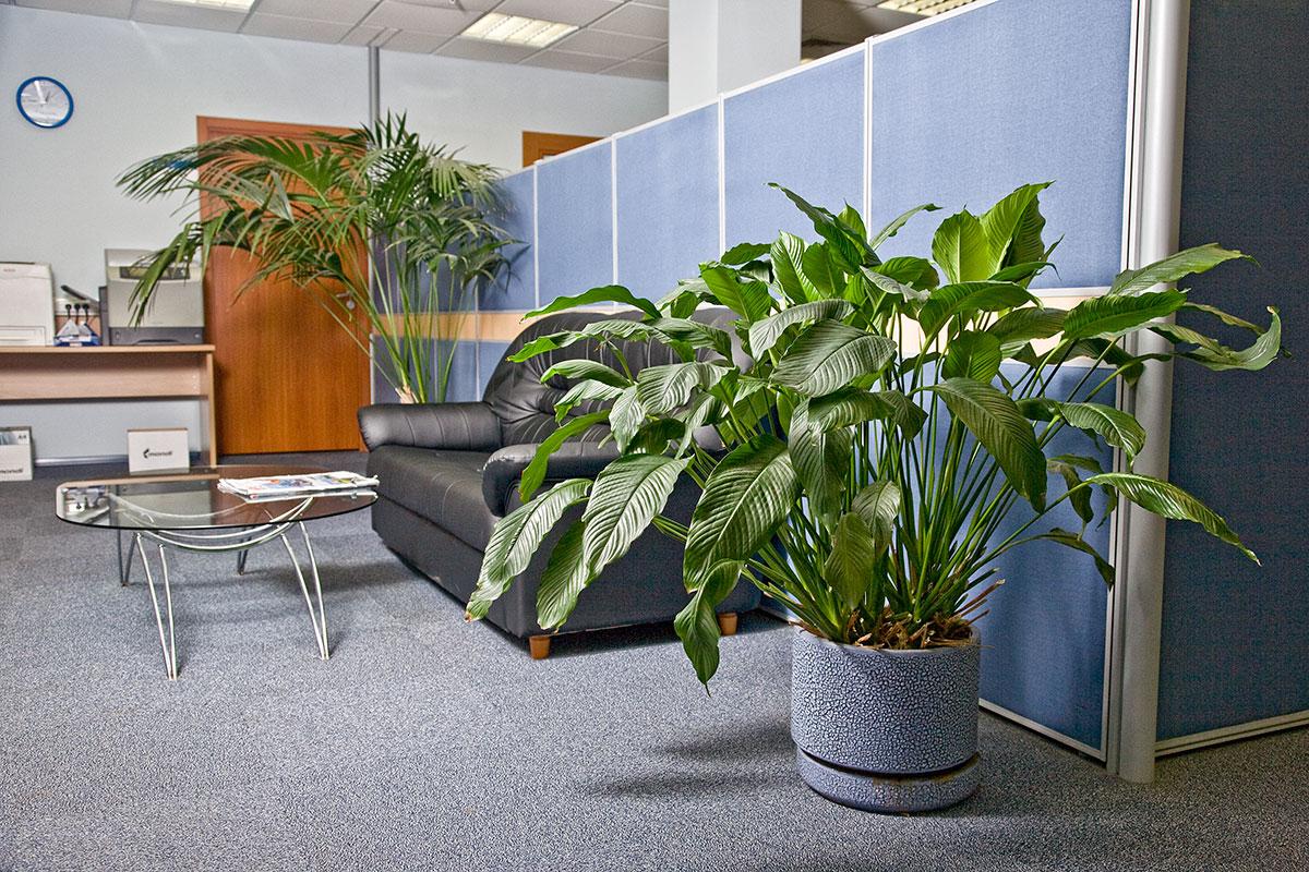 Домашние и офисные цветы
