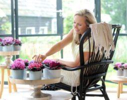 Как ухаживать за фиалками: основные правила ухода за сенполиями в домашних условиях.