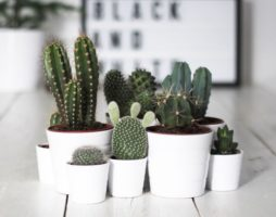 Виды домашних кактусов для декора интерьера