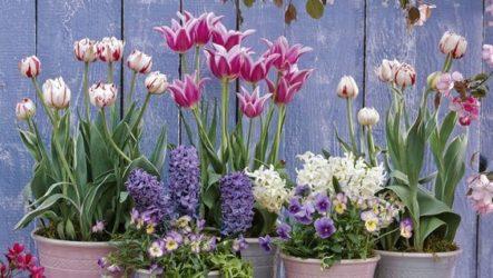 Весенние цветы в саду, их виды, особенности выбора