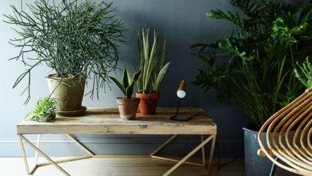 Модный вызов: новая роль комнатных растений в интерьере