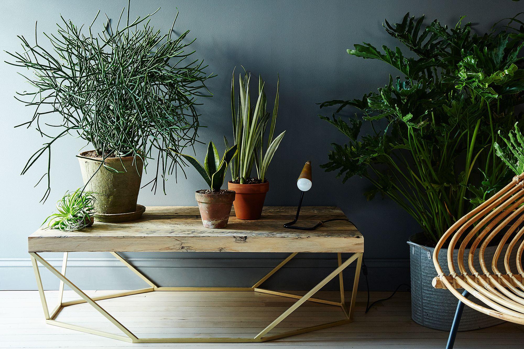 Комнатные растения в интерьере: оформление и уход за цветами
