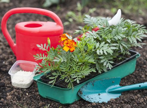 Неприхотливые однолетники для сада цветущие все лето