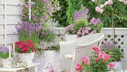 Декоративное оформление дачного участка однолетними и многолетними цветами