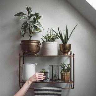 Какие бывают домашние растения и их названия