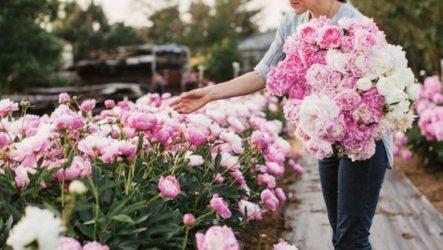 Декоративные кустарники для сада и дачи: фото и названия