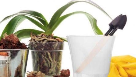 Секреты домашнего ухода за экзотической орхидеей