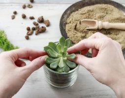 Как выращивать суккуленты: особенности разных видов растений и правила ухода